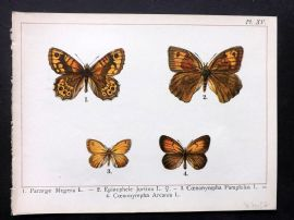 Joanny Martin 1902 Antique Butterfly Print 15